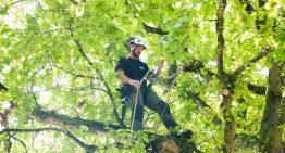 Tree Squadron