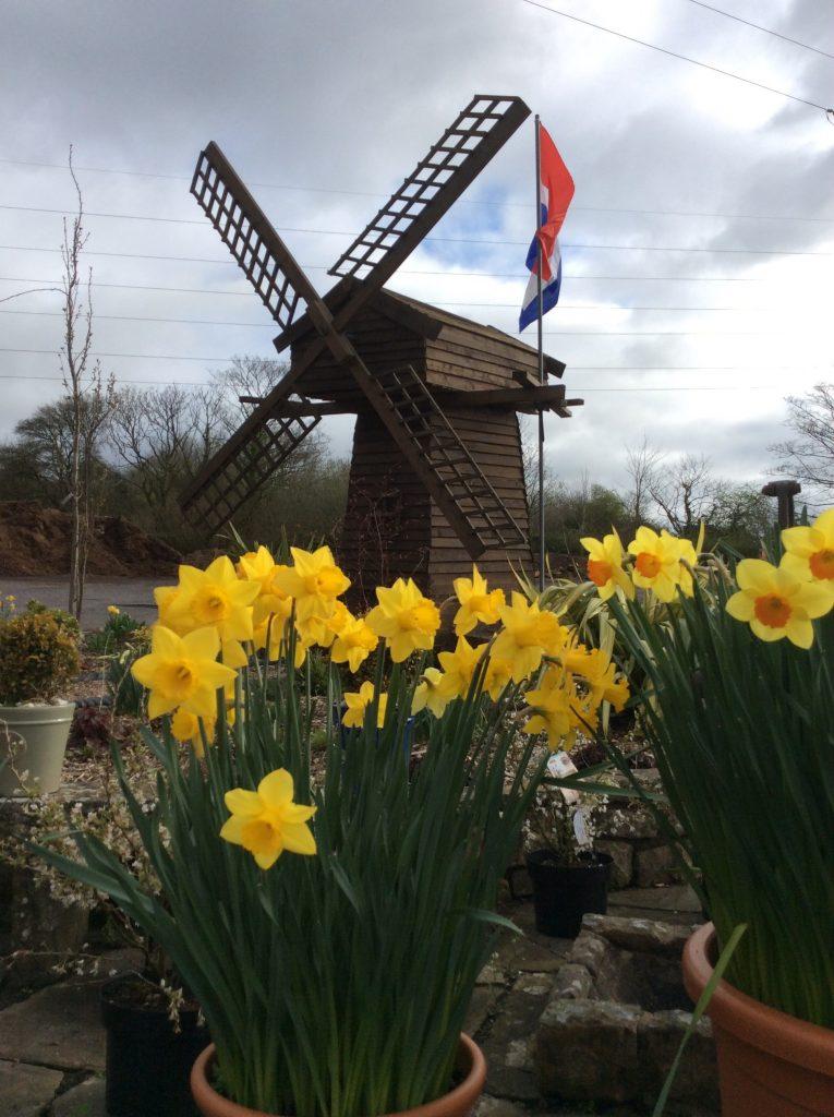 Dutch Garden Centre City Life Cardiff Windmill